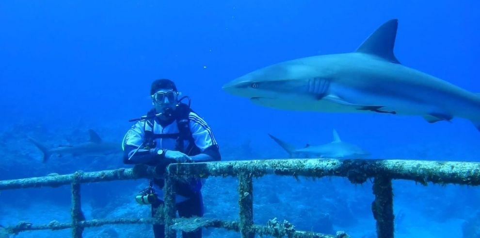 Buceo Bahamas