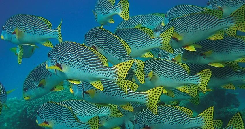 fish-swarm-850×450