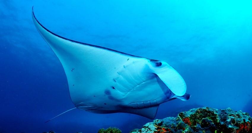 the-junk-similans-manta-diving 850×450