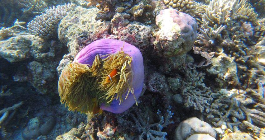 Viaje en grupo Maldivas buceo