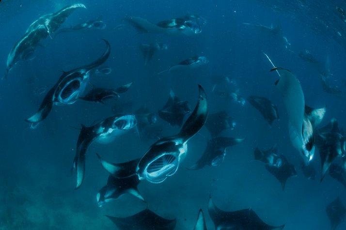 maldivas buceo