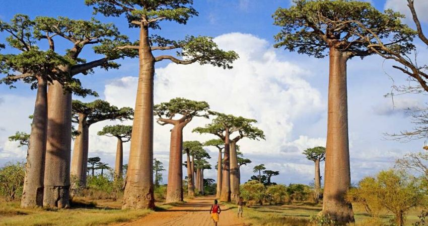 Madagascar_viaje_ki_travels_baobabs
