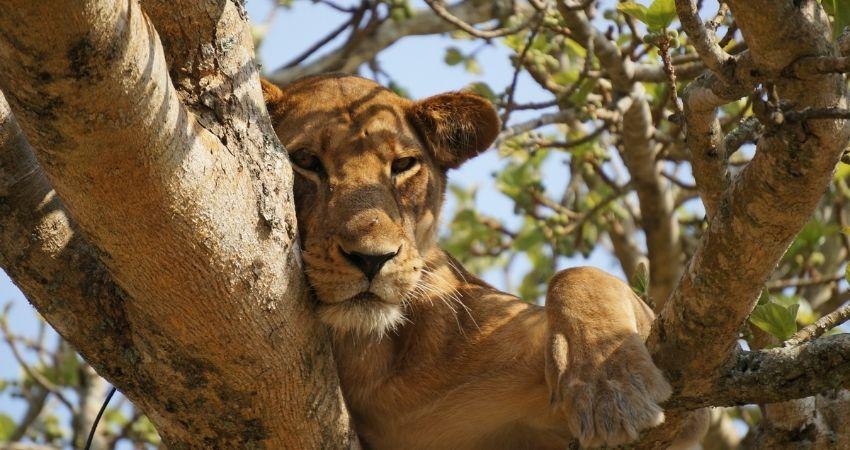 Safari Uganda viaje Ki Travels