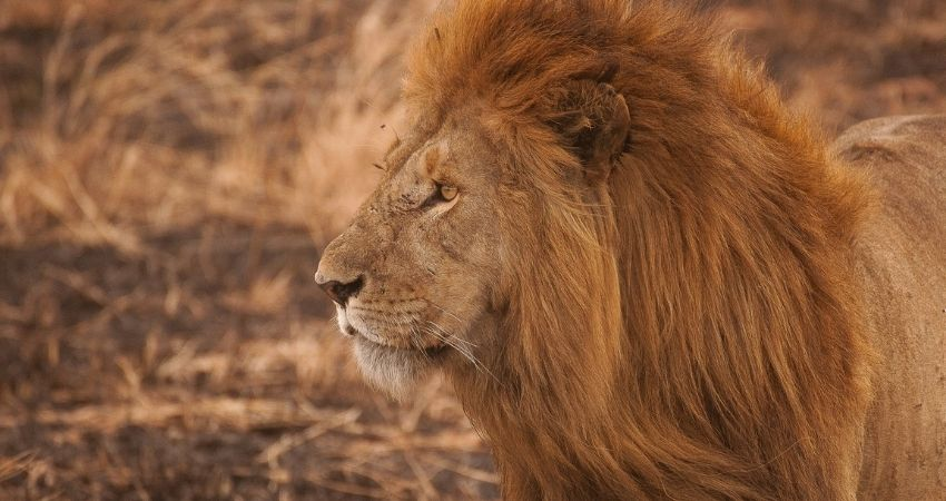 ki safari
