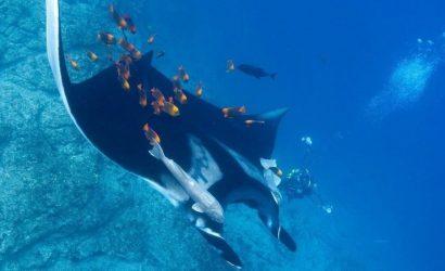 Revillagigedo buceo en isla socorro